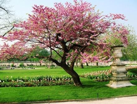Погода в апреле в париже